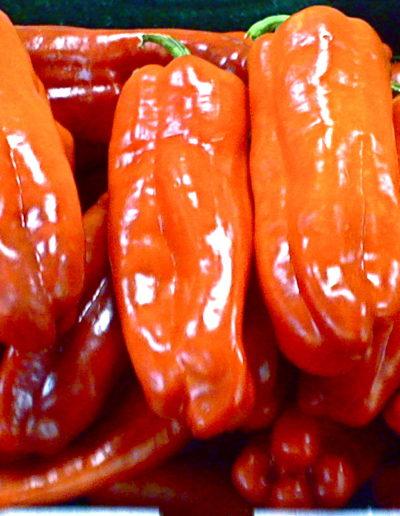 red-cubanelle-pepper_4423871278_o