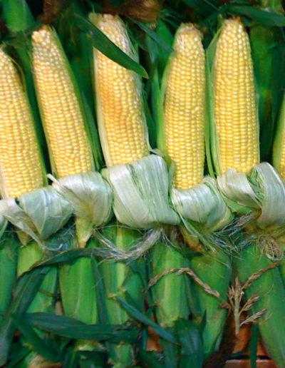 yellow-corn_4423866304_o
