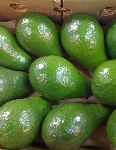 avocado-20ctdominican_4423113849_o