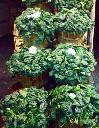 bushel-spinach_4423877178_o