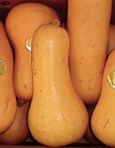 butternut-squash_4422978343_o