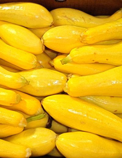 fcy-yellow-zucchini-straightneck_4422982087_o