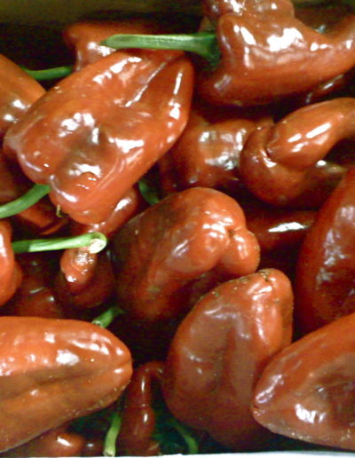 red-publano-pepper_4423106909_o
