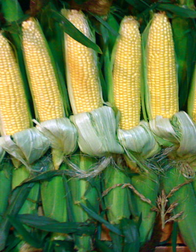 yellow-corn_4423866304_o